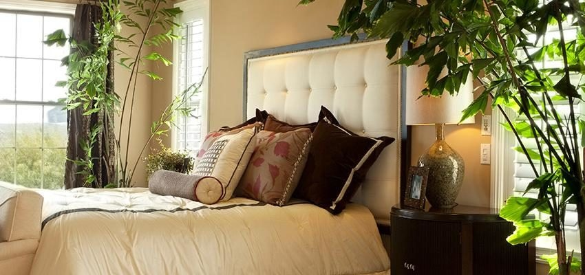 des plantes pour la chambre pour mieux dormir. Black Bedroom Furniture Sets. Home Design Ideas