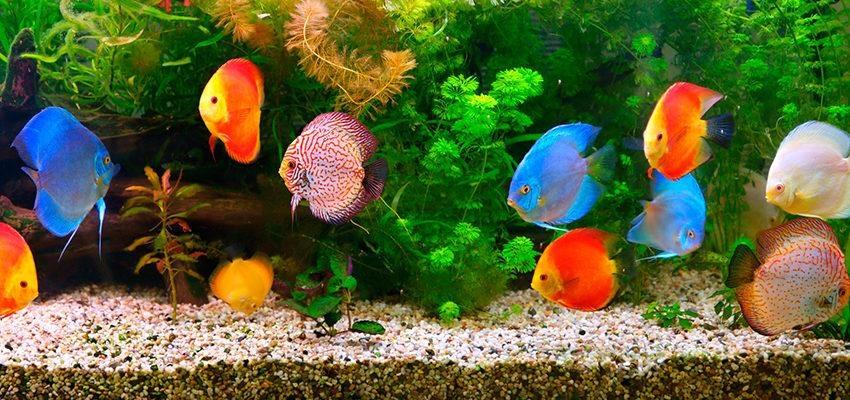 Tout ce que vous devez savoir pour un aquarium feng shui