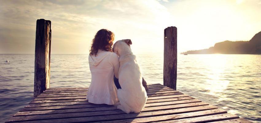 3 preuves que les chiens reconnaissent l'état d'esprit des humains