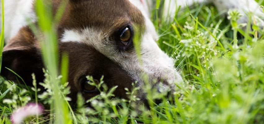 La phytothérapie pour chiens : Ce qu'il faut savoir