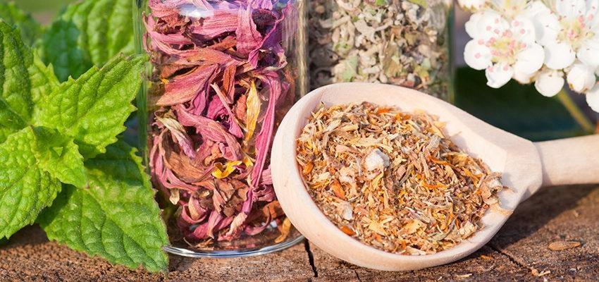La phytothérapie pour la vessie : Herbes pour vessie hyperactive