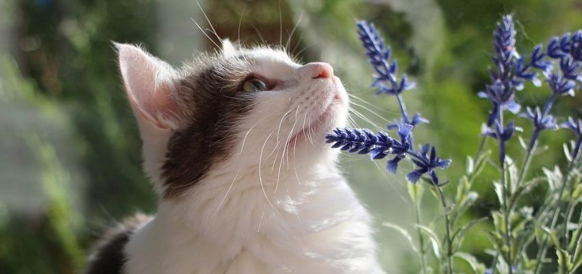 Quelle fleur de Bach pour chat utiliser