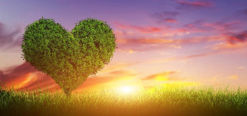Karma de l'amour : et si rien n'était le fruit du hasard ?