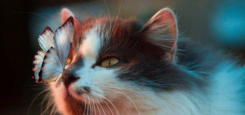 Pourquoi les chats préfèrent une personne à une autre?