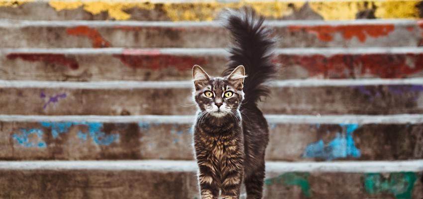 Est-ce que les chats sentent les séismes?