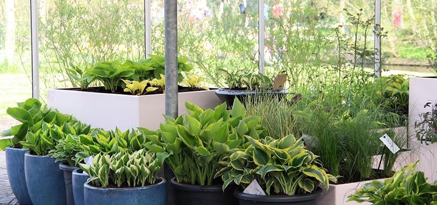 Les plantes pour conjurer l'envie et le mauvais œil