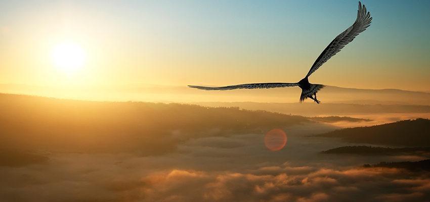 La signification spirituelle de l'aigle