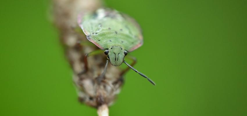 La signification spirituelle des insectes