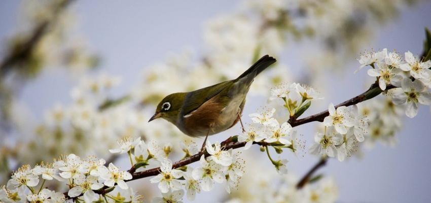 La signification spirituelle de l'oiseau