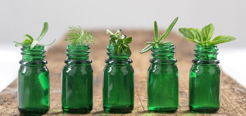 Quelles sont les plantes médicinales que nous pouvons cultiver ?
