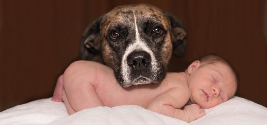 5 bienfaits lorsque les animaux et les bébés grandissent ensemble