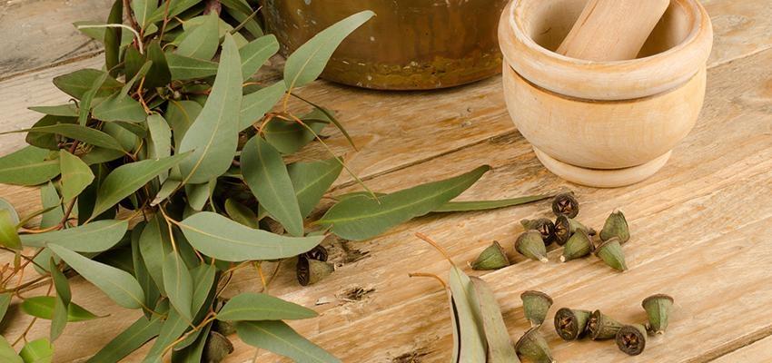 Quelles sont les propriétés de l'encens d'eucalyptus ?