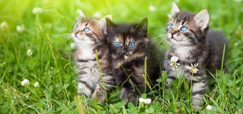 Quelle est l'énergie spirituelle des chats ?