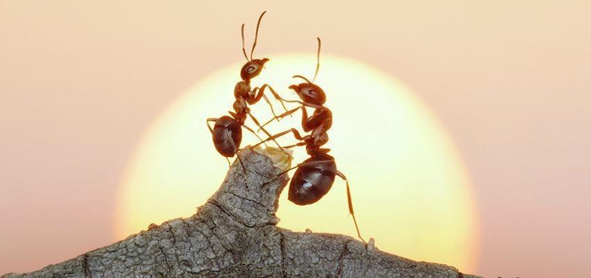 Les insectes ont une sensibilité spirituelle