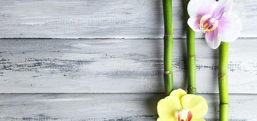 Quelles sont les différents types de plante qui attire la chance ?