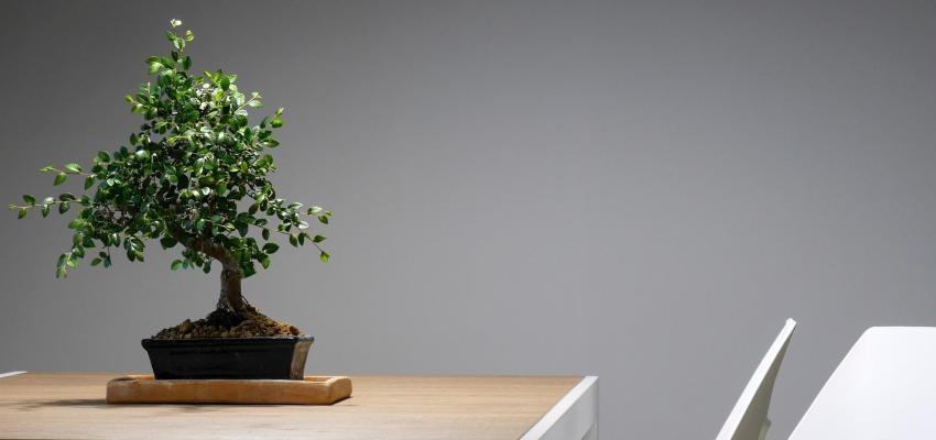 comment augmenter l nergie et la vibration de votre maison. Black Bedroom Furniture Sets. Home Design Ideas