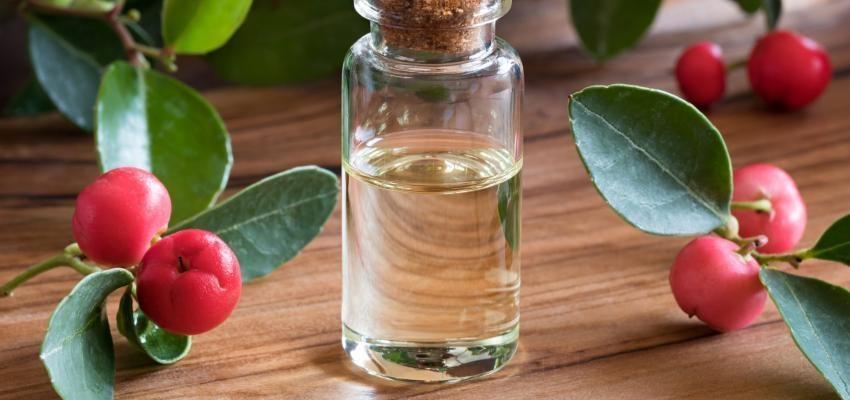 Les bienfaits de l'huile essentielle de gaulthérie couchée