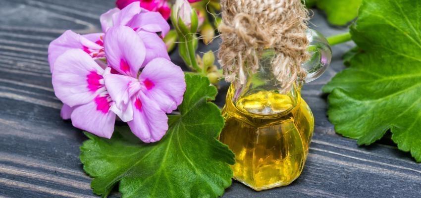 Les bienfaits de l'huile essentielle de géranium bourbon