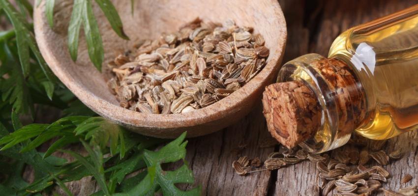 Les bienfaits de l'huile essentielle de khella