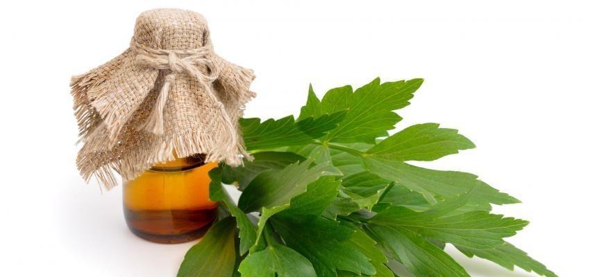 Les bienfaits de l'huile essentielle de livèche