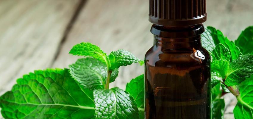Les bienfaits de l'huile essentielle de menthe verte