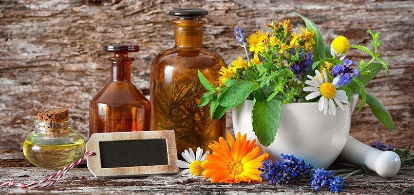 Les plantes du mois janvier : Bienfaits et utilisations