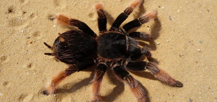 l animal totem d araign e et sa signification. Black Bedroom Furniture Sets. Home Design Ideas