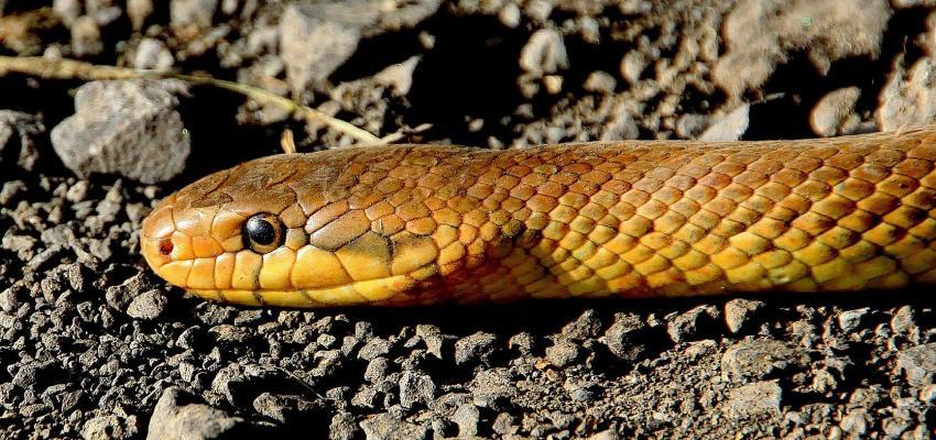 L'animal totem du serpent et son symbolisme