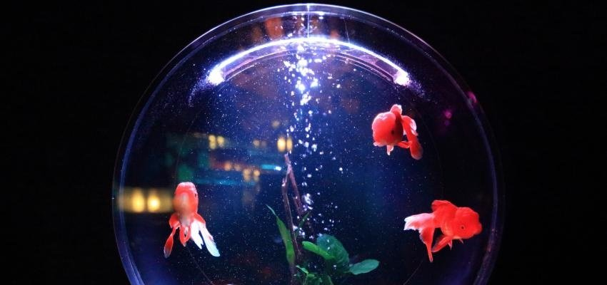 Les bonnes règles d'un aquarium en Feng Shui