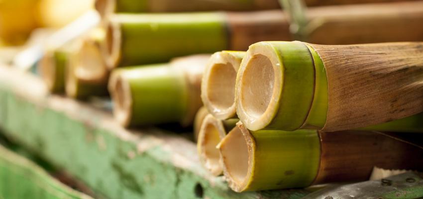 Bambou porte-bonheur – une plante qui attire de bonnes énergies dans la maison