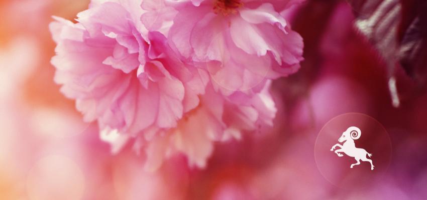 Bélier – plantes et astrologie