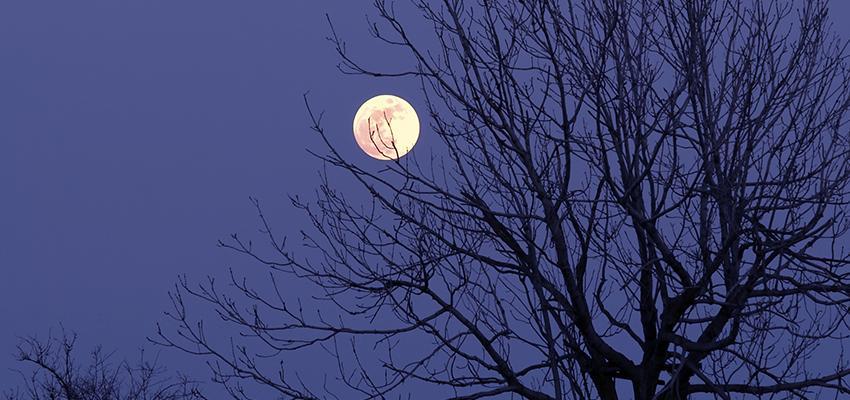 Calendrier lunaire du mois de novembre