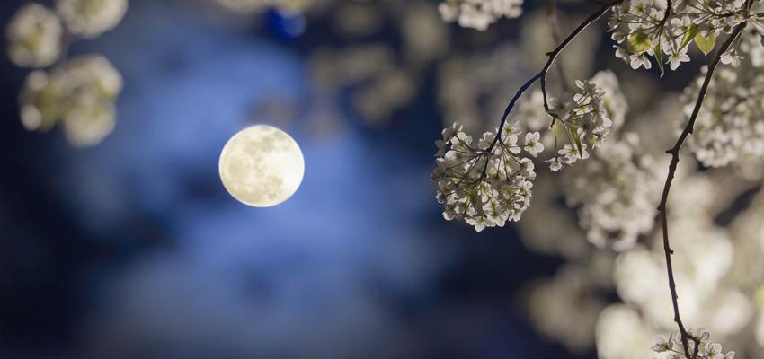 Calendrier lunaire : le mois de juin 2016 propice au jardinage