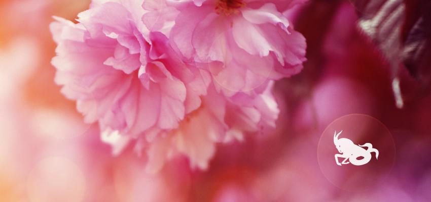 Capricornes - plantes et astrologie