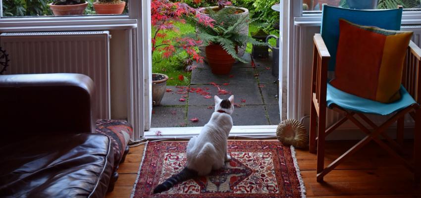 Comment un chat peut repousser l'énergie négative ?