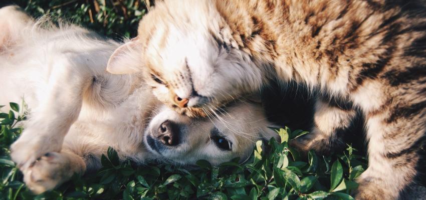 Les chats, chiens et Feng Shui