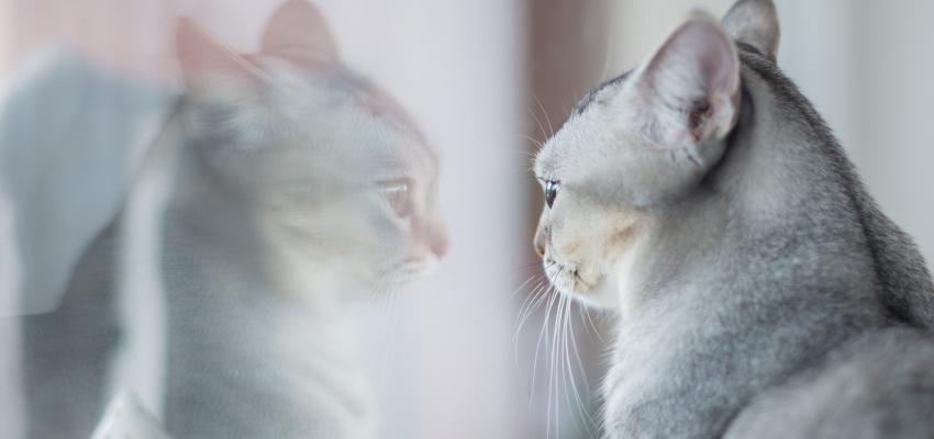 Les chats ressentent la tristesse : vraiment possible ?