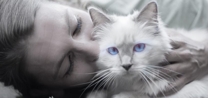 Les chats sentent la grossesse : vrai ou faux ?