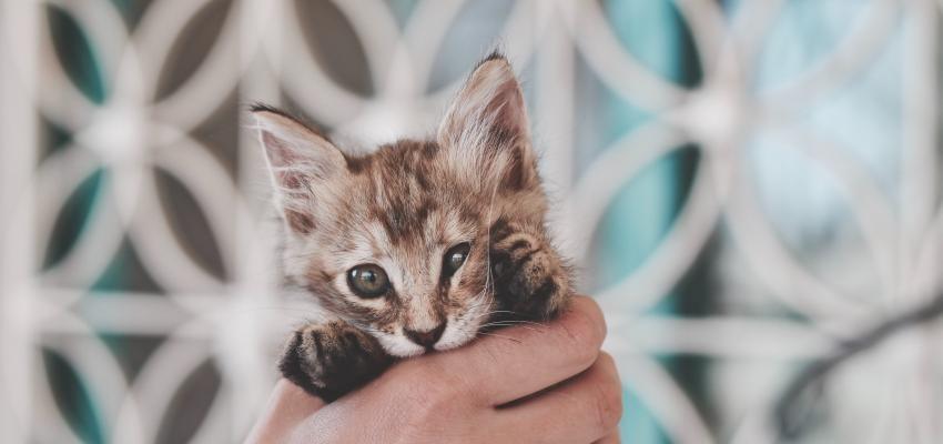 Les chats sentent le cancer : info ou intox ?