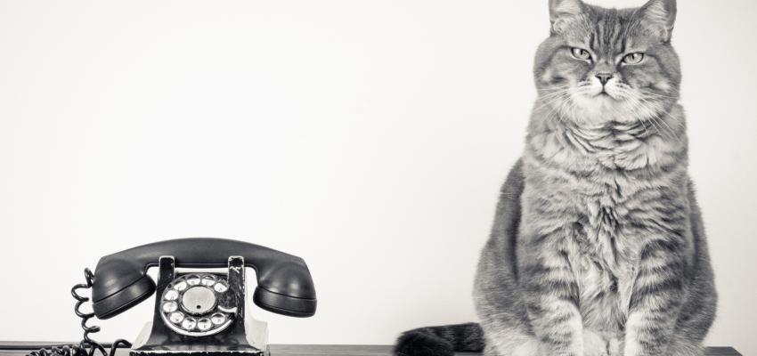 Les chats sentent la maladie et sauvent des vies