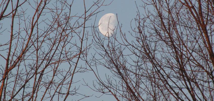 Dernier quartier de lune – Meilleure période pour une purge corporelle et émotionnelle
