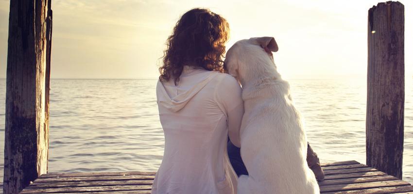 Faire appel à un magnétiseur pour soigner votre animal