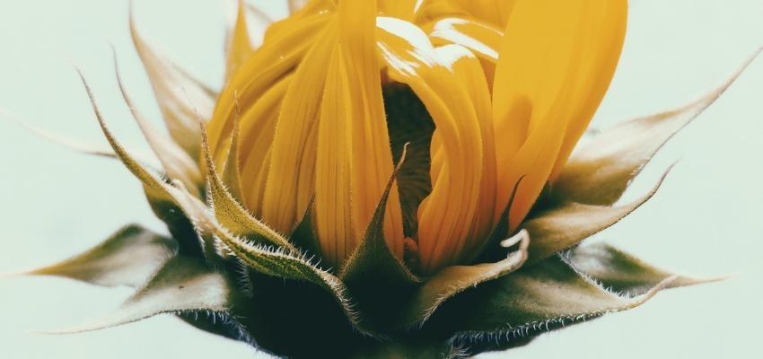 Les fleurs et le Feng Shui