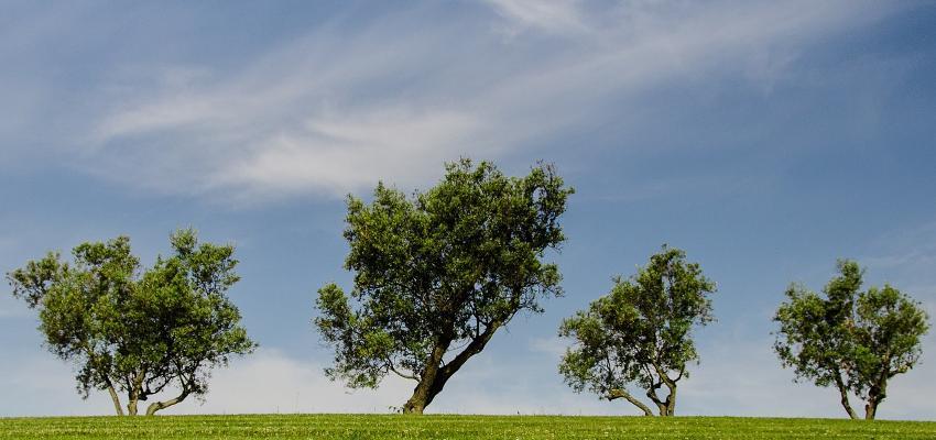 Horoscope des arbres : découvrez votre arbre !