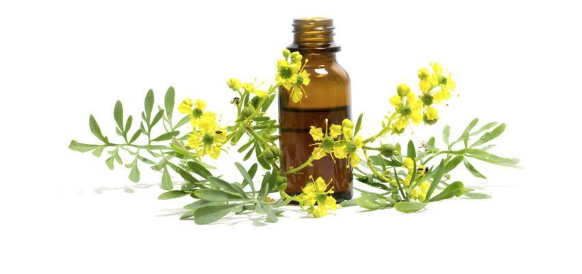 L'huile essentielle d'arruda et ses bienfaits