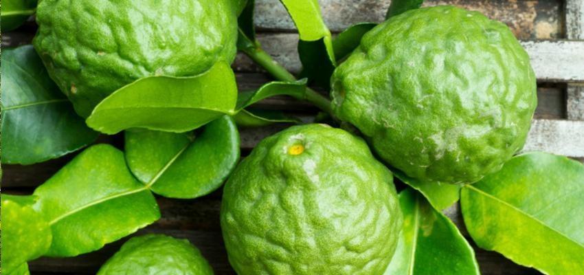 Huile essentielle de bergamote: vertus et utilisation