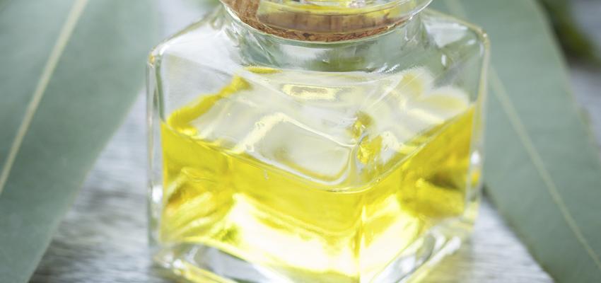 L'huile essentielle d'Eucalyptus radié, pour tous les problèmes ORL