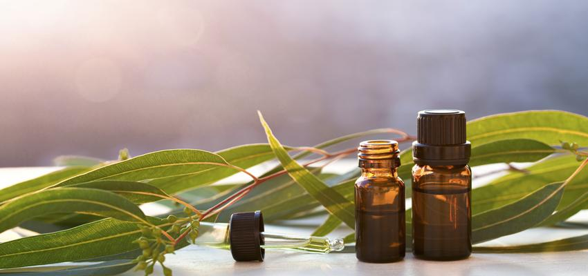 L'utilisation de l'huile essentielle d'Eucalyptus citronné et ses bienfaits