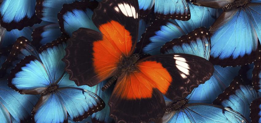 Le symbolique des papillons : les messagers de l'univers venus pour vous guider