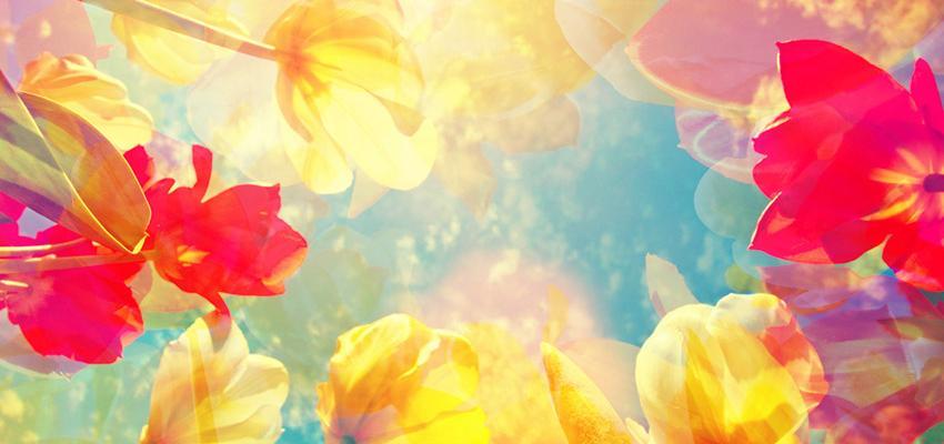 Les 7 groupes de fleurs de Bach